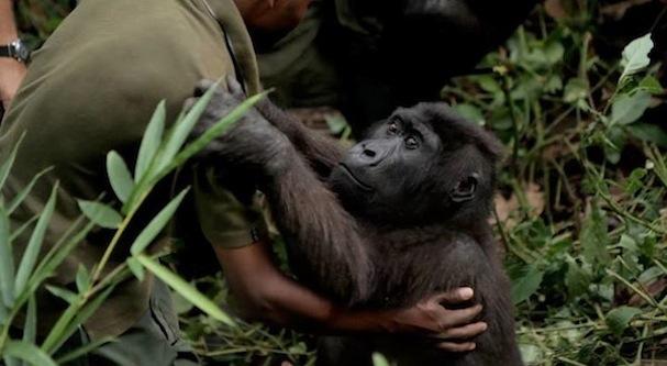 Virunga 607
