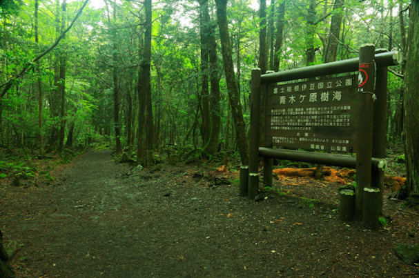 Aokigahara Forest 607