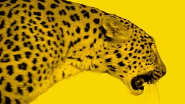 Locarno leopard 607