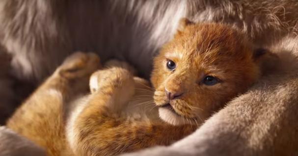 Lion King 607 1