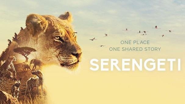 serengeti poster 607