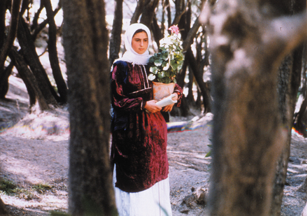 through the olive tree 607